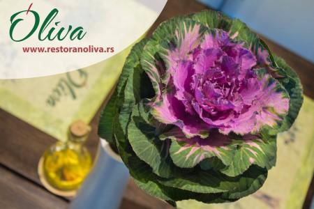 oliva belgrade restaurants novi beograd11