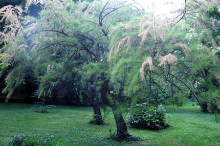 botanicka basta jevremovac belgrade attractions centar3