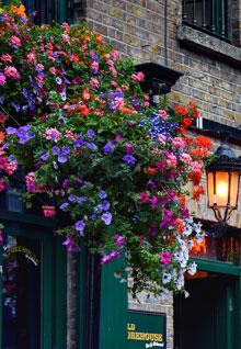 Dublin Dublin holiday rentals