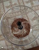 Смузи шпинат+огурец+кефир - фото приготовления рецепта шаг 1