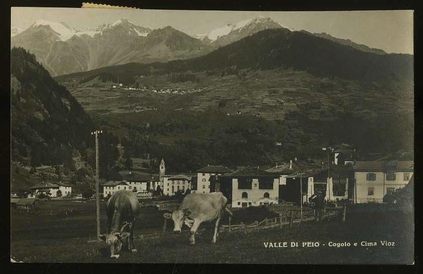 Valle di Peio. Cogolo e Cima Vioz.