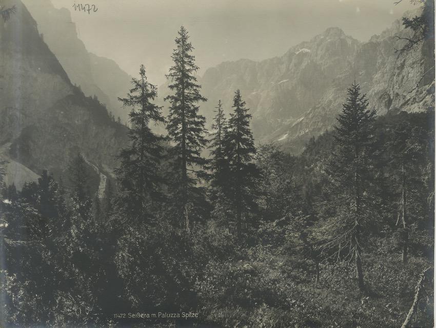 11472. Seissera m. Paluzza Spitze.