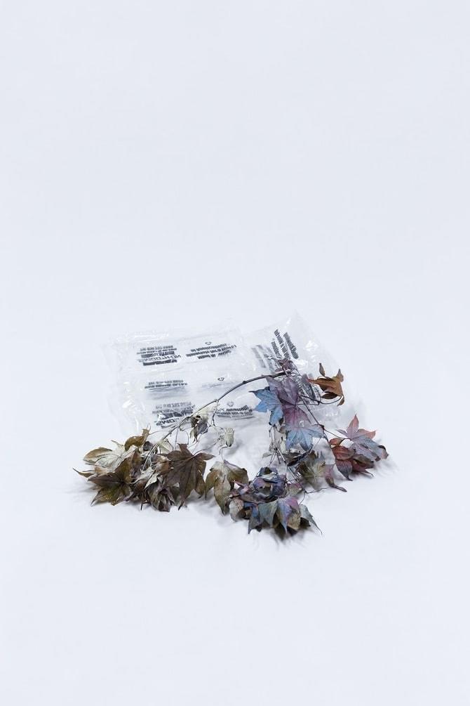 Medallion - Bad Seeds
