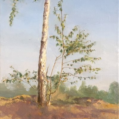 Etude with young birch
