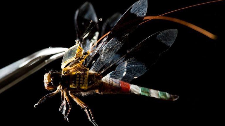 Ferngelenkte Insekten – Jetzt sind sie Realität
