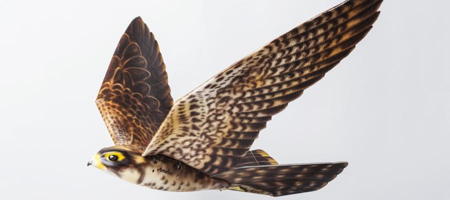 Falken-Drohne