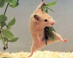 hamster_01[1]
