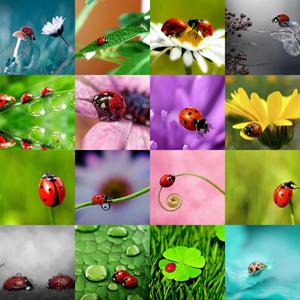 ladybugs Pasxalitses