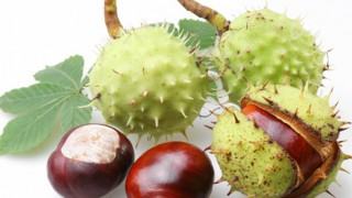 Sweet chestnut Λίλιαν Σίμου astrolife