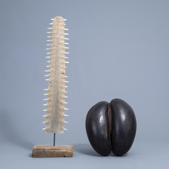 A sea coconut or coco de mer (lodicea maldivica), Seychelles, and a sawtooth of a sawfish on a wooden base, 20th C.