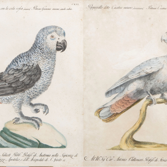 Xaverio Manetti (1723-1785): Two parrots, hand-coloured engravings, 18th C.