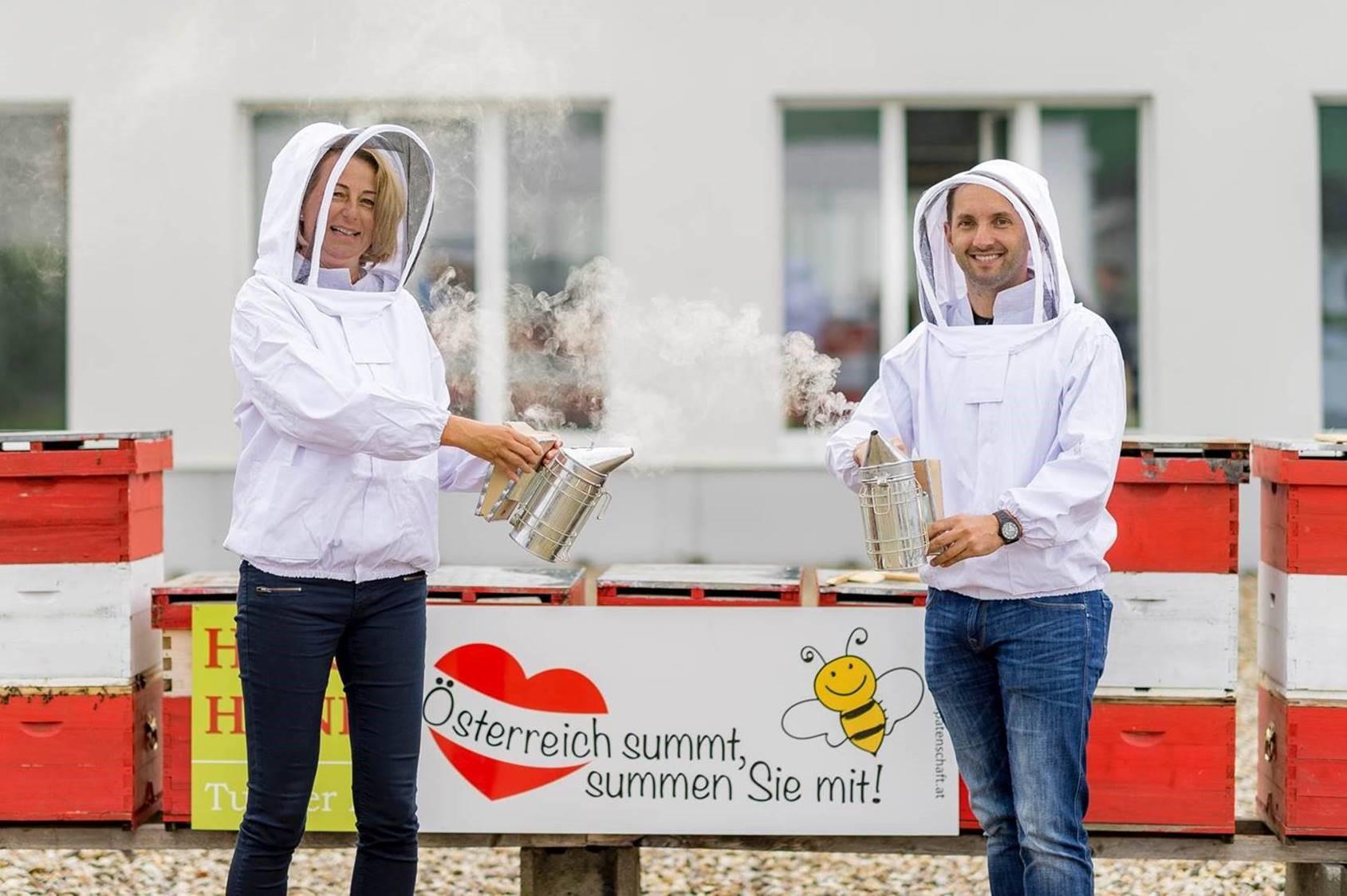 Bienen in Freistadt