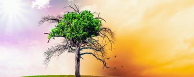Symbolbild für den Klimawandel