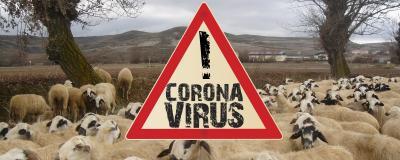 Herdenimmunität am Beispiel Schafe