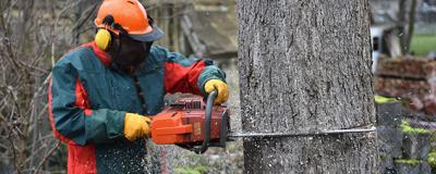 Baum wird umgeschnitten