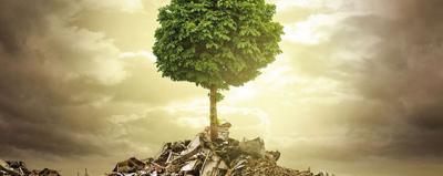 Baum steht auf Bauresten