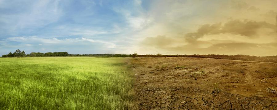 Gras und Erd-Landschaft