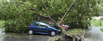 Baum ist auf ein Auto gefallen