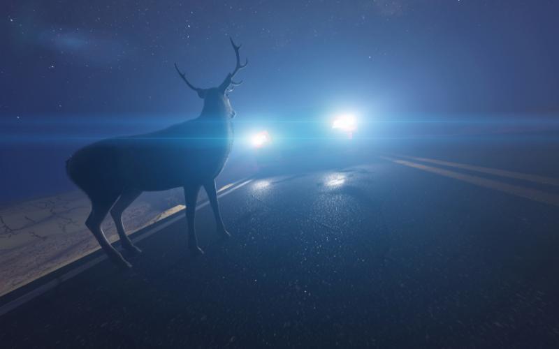 Hirsch auf einer Straße