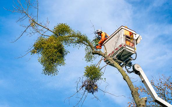 Baum schneiden