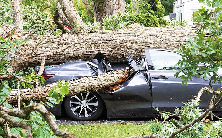 Auto wurde unter umgefallenen Baum begraben