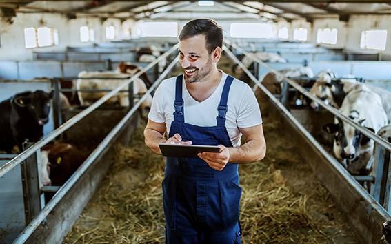 Bauer mit Tablet im Stall