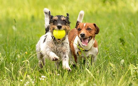 Hunde auf einer Wiese