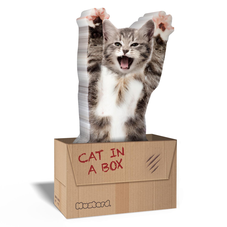 Katze In Kiste
