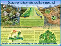 Сохраним пойменные леса Кыргызстана!