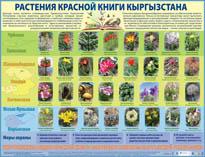 Растения Красной Книги Кыргызстана