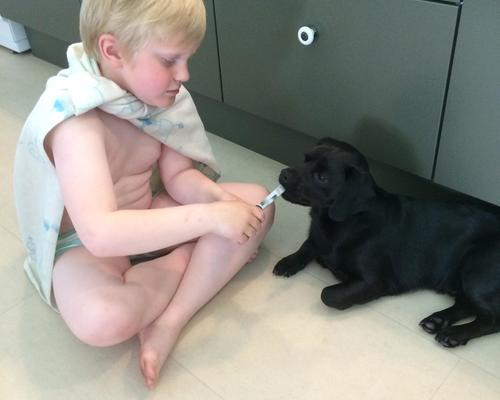 Stille og rolig mand med sød hund, søger akut bolig