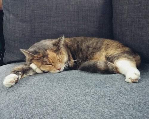 23 årig kvinde + 7 årig tyk kat søger bolig