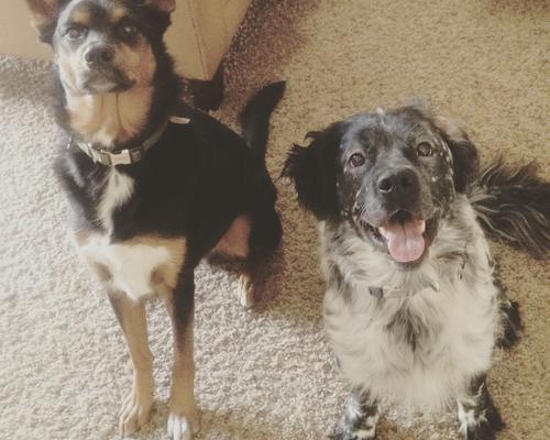 Couple with 2 dogs seeking a 2 room apartment