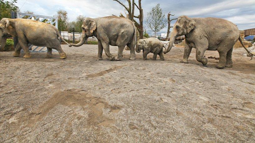 Elefanten im Kinderzoo