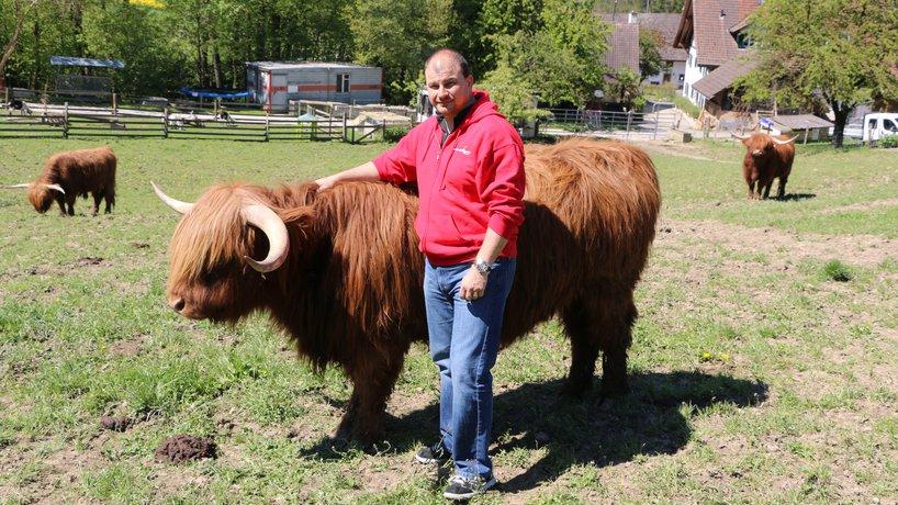 """Schottisches Hochlandrind """"Swiss-Beef"""""""