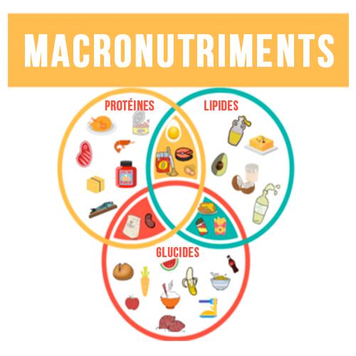#Nutrition : Les Macronutriments, qu'est-ce que c'est ?