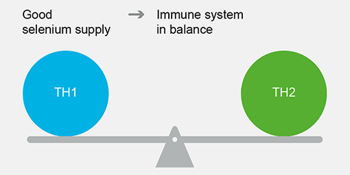 Finding the right balance against COVID-19: Can selenoprotein expression tip the scales?