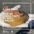 sea-snail-biosyn-Arzneimittel