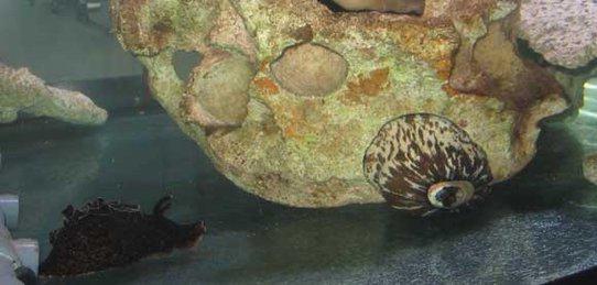 biosyn proprietary aquaria tank