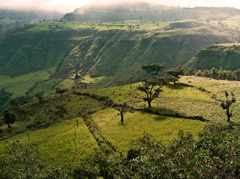 Hochland-Kaffee aus Äthiopien