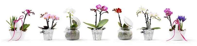 Orchideen-Pflege-Sets gewinnen