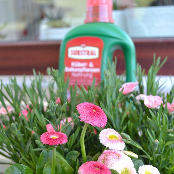 SUBSTRAL® Kübel- und Balkonpflanzen Nahrung mit Blumen