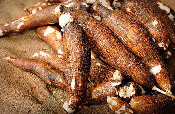 Maniok – alternative Kohlenhydratquelle zu Getreide