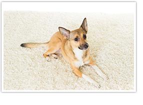Der AeG CX7-45ANI ist ideal für Allergiker und Haustierbesitzer