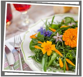 Der Wildgärtner Sommer-Aktiv-Salat