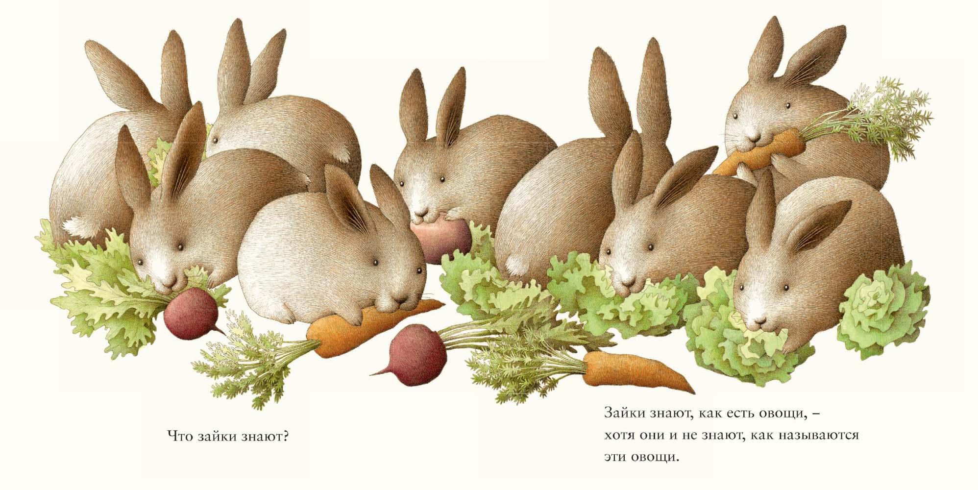 Питер МакКарти, иллюстрация из книги Зайкины Сны