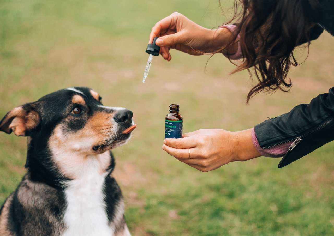 What is CBD for Dog: Useful Properties & Health Improvement