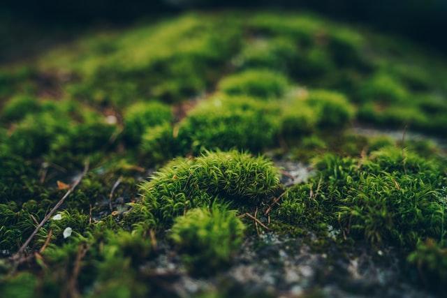 Doğada Yön Bulma Yöntemleri