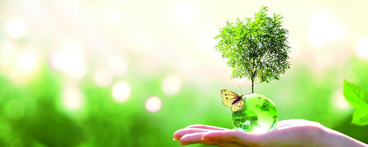 Klimaschutzgesetz und Statusbericht Kommunaler Umweltschutz