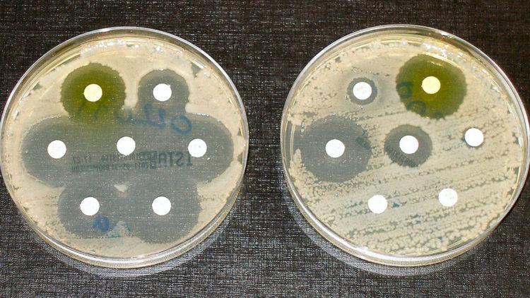 بكتيريا مقاومة للمضادات الحيوية, أدوية, بكتيريا, بيولوجي